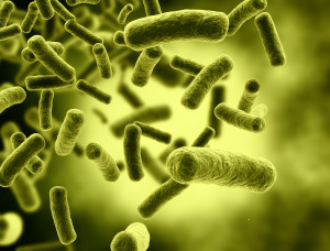 E.COLI-matieres-infectieuses-formation-tmd-montreal